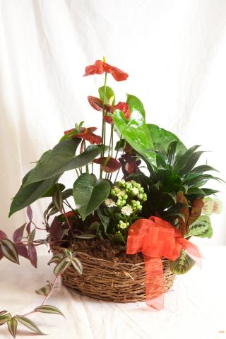 Christmas_Planter_Baskets_Port_Alberni.jpg