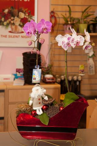 Christmas_Planter_Baskets_Orchids_Port_Alberni.jpg